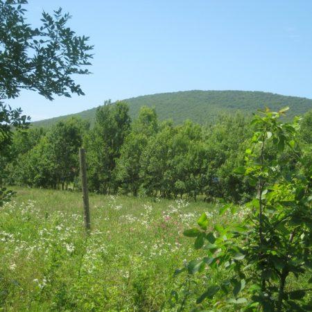 Продается земельный участок под коммерцию, 13700 кв.м., пос. Южная Озереевка | Фото 4